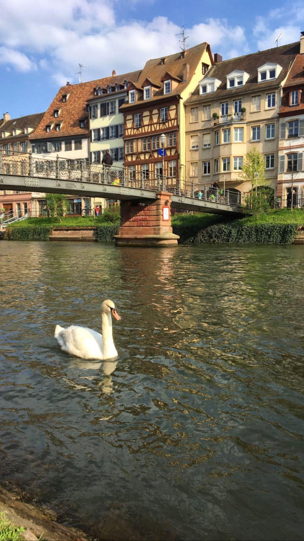 qué hacer en Francia - Strasbourg 4